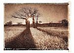 Baobab Trees at Sunset Near Derby, Western Australia Australia