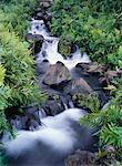 Cascade et feuillage Maui, Hawaii, USA