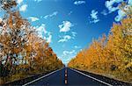 Road and Trees in Autumn Okotoks, Alberta, Canada