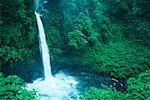 Waterfall and Foliage Costa Rica