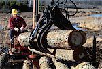 Homme de chargement de bois de œuvre sur camion, Ontario, Canada