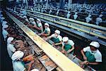 Arbeitnehmer bei der Fischverarbeitung Pflanzen Bangkok, Thailand