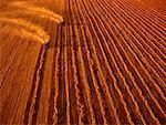 Aerial View of Wheat Harvesting Portage la Prairie, Manitoba Canada