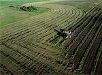 Vue aérienne du champ de luzerne Russell, Manitoba, Canada