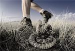 Hiker Walking near Rattlesnake Alberta, Canada