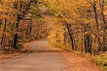 Route à travers les arbres à l'automne, le Parc Provincial Algonquin, Ontario, Canada