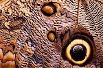 Gros plan d'une aile de papillon