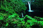 Rainbow Falls et feuillage, Hawaii, USA