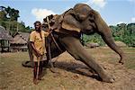 Man Training Elephant at Elephant Training Camp Madhuban, Andaman Islands, India
