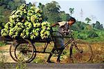 Homme portant une charge de Banannas sur vélo Havelock Island, îles Andaman Inde