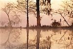 See und Bäumen