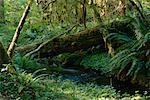 Hoh Rainforest Olympic National Park Washington, USA
