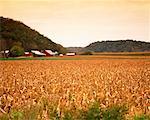 Farm and Field of Corn