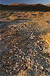 Cracked Mud in Desert Sossuvlei, Namibia South Africa Africa