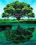 Large Maple Tree and Lake