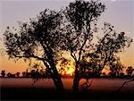 Lone Tree Kakadu National Park, Australie