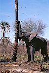 Elephant Pushing Down Tree