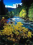 Umpqua River Oregon, USA