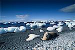 Weddell Seal on Beach Brown Bluff, Antarctic Peninsula