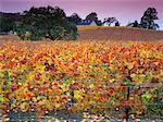 Vignoble de Sonoma, Californie, Etats-Unis