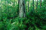 Corkscrew Swamp Sanctuary, Florida Everglades, USA