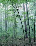 Apalachicola National Forest, Florida, USA