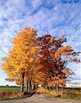 Tree Covered Road in Autumn, Milton, Ontario, Canada