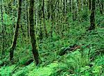 Rainforest, Umpqua Valley, Oregon, USA