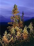 Crépuscule, moyenne montagne, du Nord des Rocheuses, la Colombie-Britannique, Canada