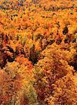 Automne, Cape Breton Highlands National Park, Nova Scotia, Canada