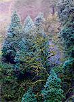 Columbia River Gorge, Oregon, USA
