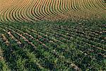 Furrowed Field, near Waterville, Washington, USA