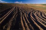 Terrain raviné près de Waterville, Washington, États-Unis