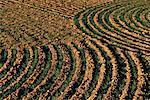 Furrowed Field near Waterville, Washington State, USA