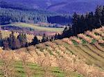 Vergers de pommiers, vallée de la rivière Hood, Oregon, Etats-Unis