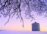 Gelée blanche au crépuscule, Alberta Rural