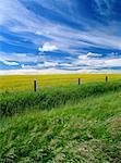 Rural Alberta, Canada, near Picture Butte