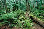 Coastal Rainforest, Garibaldi Park, British Columbia, Canada