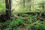 Temperate Coastal Rainforest, Carmanah Pacific Provincial Park, British Columbia, Canada