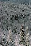Arbres près de Trail, en Colombie-Britannique, Canada