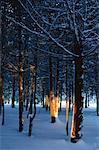 Arbres et neige, Bluff, Nouveau-Brunswick, Canada de personne