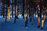Arbres et neige en soirée lumière, Bluff, Nouveau-Brunswick, Canada de personne