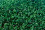 Trees Along the Cabot Trail, Nova Scotia, Canada