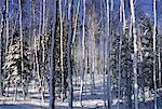Bois en hiver, Bluff, Nouveau-Brunswick, Canada de personne