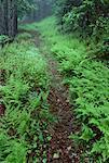 Piste forestière à la fin du printemps, Bluff, Nouveau-Brunswick, Canada de personne