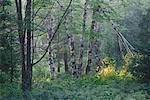 Lisière de forêt, Bluff, Nouveau-Brunswick, Canada de personne