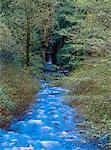Gorge Oneonta, Columbia River Gorge, Oregon, Etats-Unis