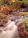 Coppermine Creek, Parc National Waterton Lakes, Alberta, Canada