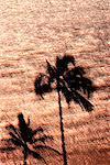 Palm Trees & Ocean, Hawaii, USA