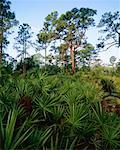 Florida Everglades, Corkscrew Swamp Sanctuary, Florida, USA
